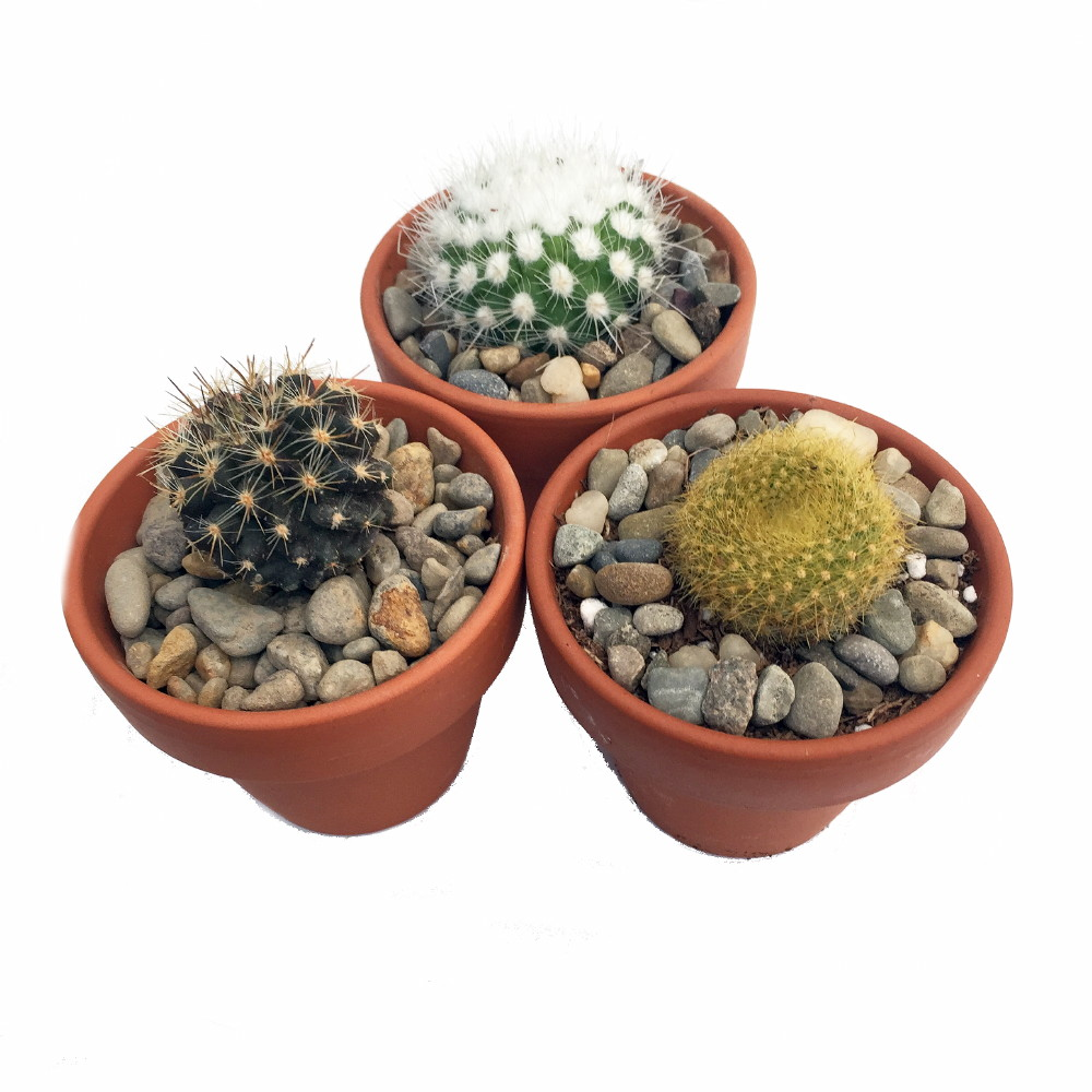 instant cactus collection 3