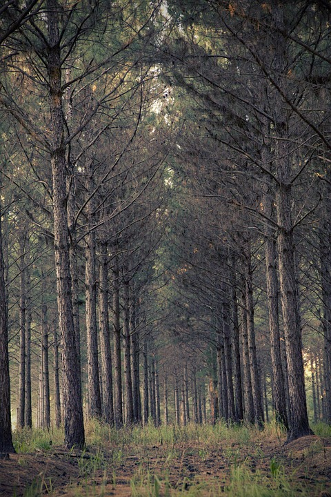 canvas print environment forest