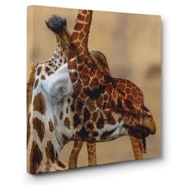Giraffe Canvas Wall Art Home Decor Walmart
