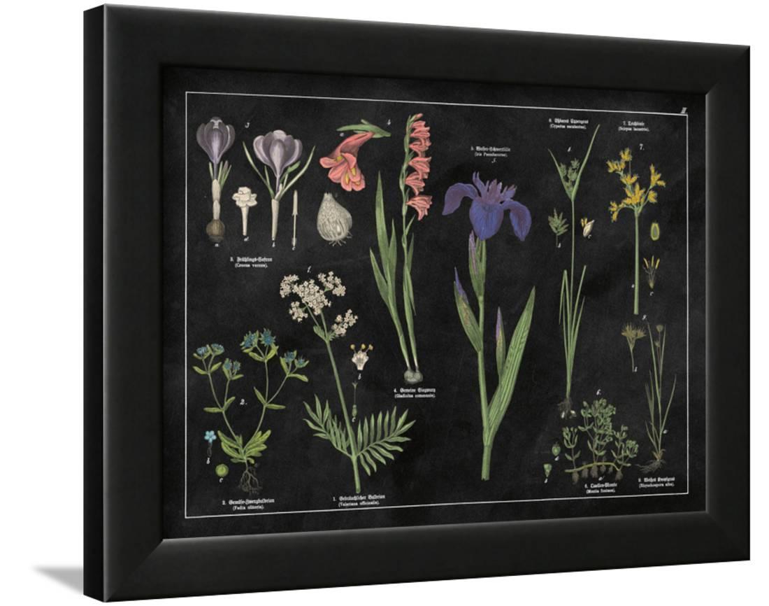 Botanical floral chart ii black and white framed print wall art by wild apple portfolio also rh walmart