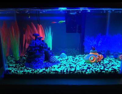 glofish 10 gallon aquarium