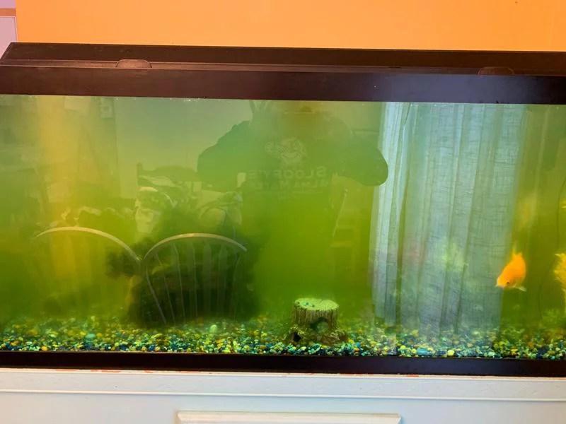 3 pack tetra algae