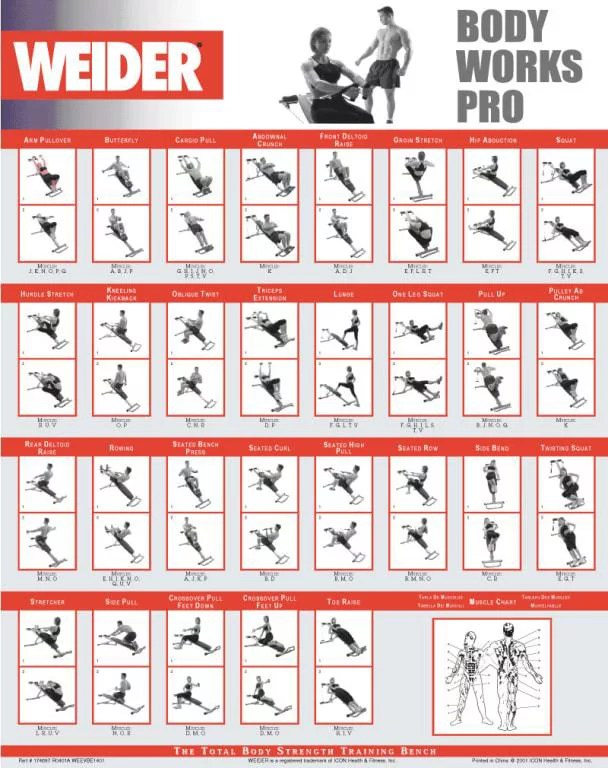 Weider Home Gym Exercise Chart Pdf : weider, exercise, chart, Weider, Exercise, Chart, Future