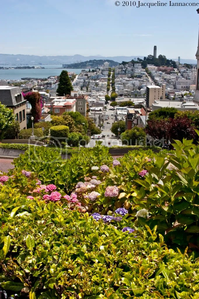 Lombard street from the top.