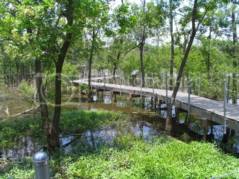 Boardwalk Through the Heard Wetlands