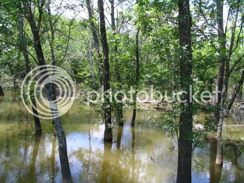 Heard Wetlands