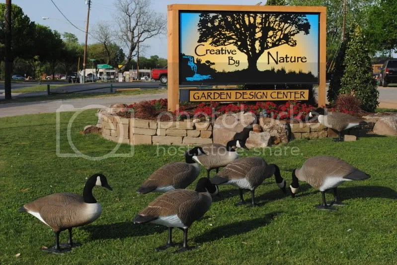 Decoy Geese at Creative By Nature