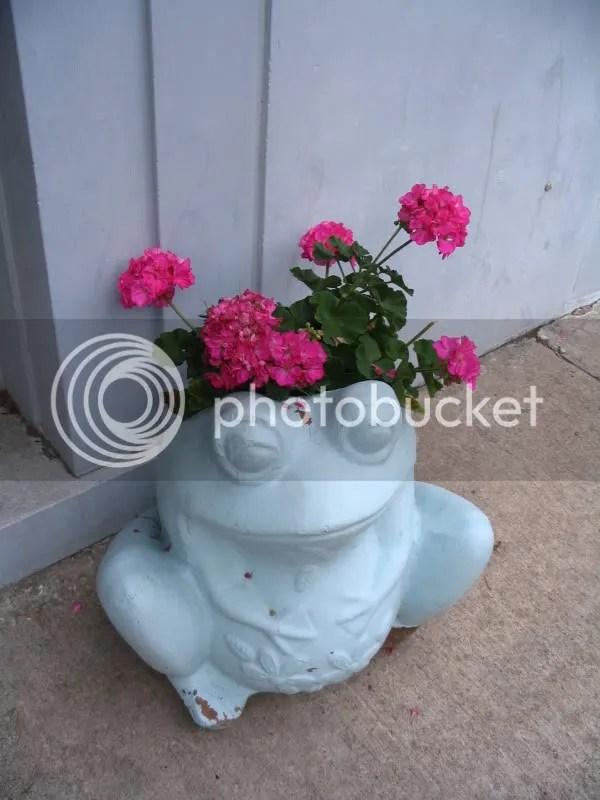 Frog Outside Allstate & Smitten's Back Door