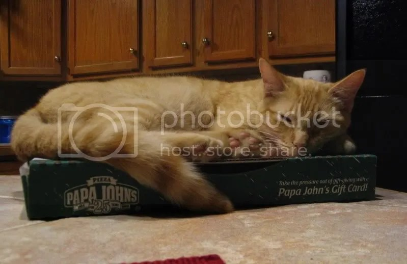 Oscar on Pizza Box