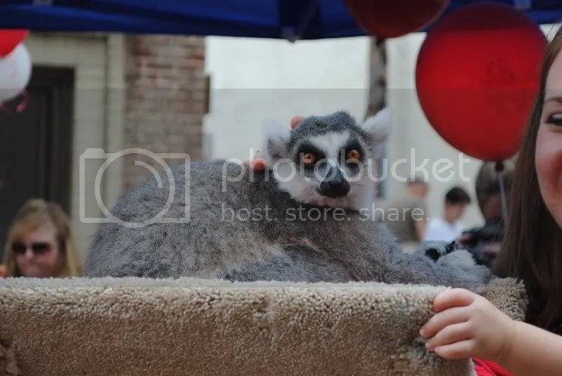 Odd Creature at the Petting Zoo
