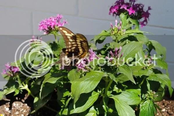 Butterfly Outside McKinney Wine Merchant