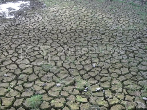 drought photo:  kodakpics370.jpg