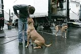 Jared Padalecki and his 2 dogs (5/6)