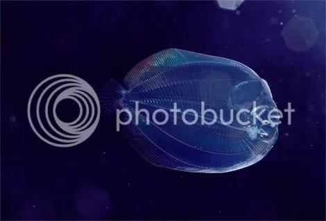 translucent larval flounder newbert Criaturas inacreditáveis do fundo do mar   parte 2   Curiosidades