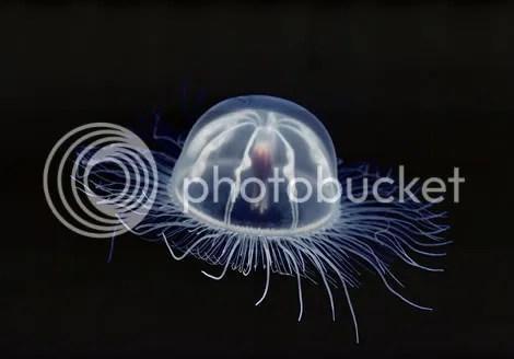 transparent jellyfish 689547 ga Criaturas inacreditáveis do fundo do mar   parte 2   Curiosidades