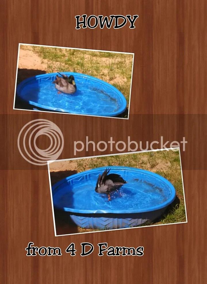 photo PhotoGrid_1399303481717_zpskjoadhgm.jpg