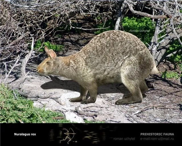 Image result for images of giant dormice