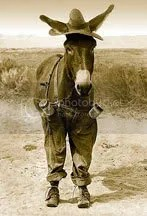 mule Pictures, Images and Photos