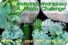 """Wandering Wednesday"" at GardenMama"