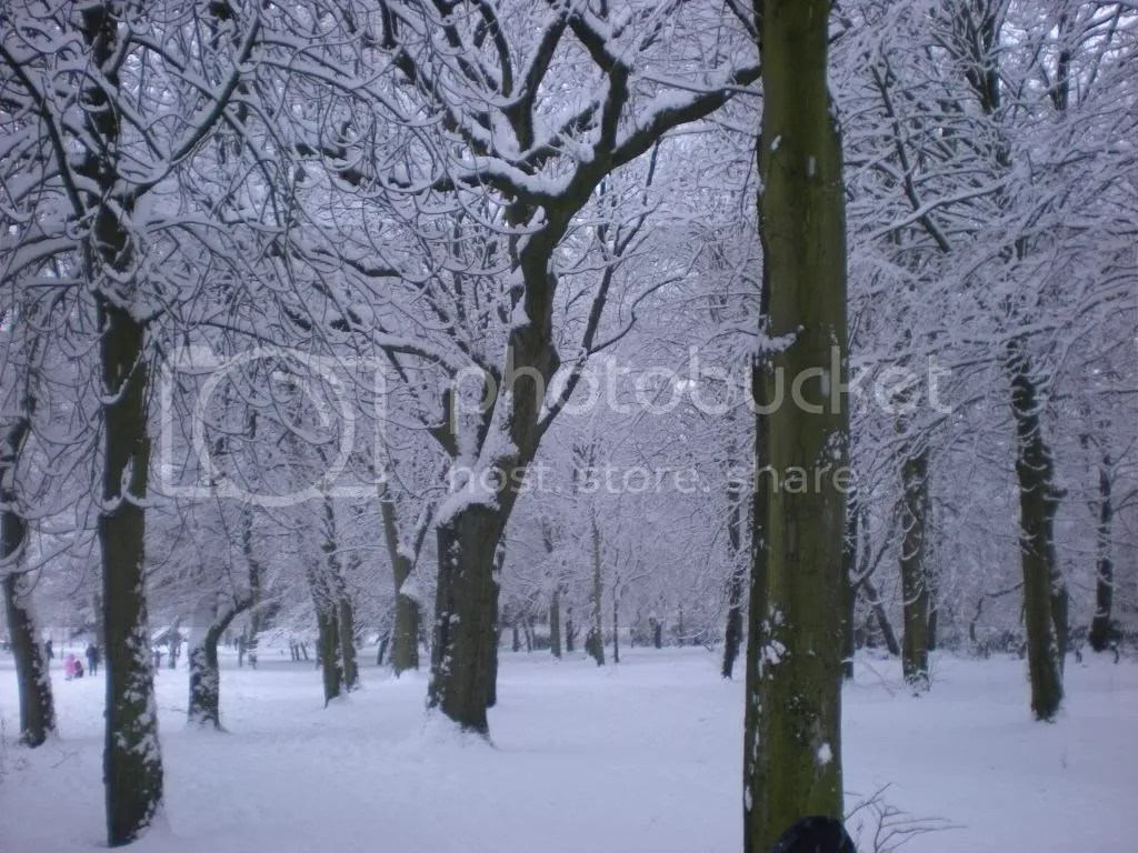 January 2010 Snow Day