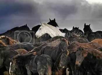 Horse rescue photo