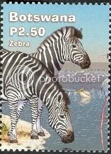 Zebra - Botswana