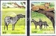 Zebras - Congo