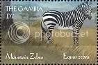 Zebra - Gambia