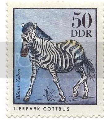 Zebra - DDR