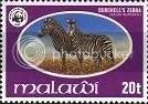 Zebra - Malawi