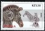 Zebra - Angola