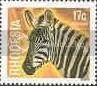 Zebra - Rhodesia