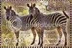 Zebras - Ghana