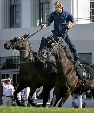 Stunt horses in NZ