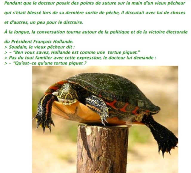 tortue piquet