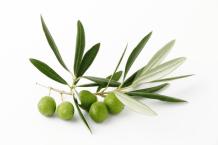 """Résultat de recherche d'images pour """"brin d'olivier"""""""