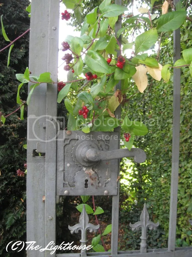 Garden Gate with Berries
