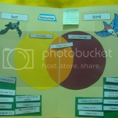 Stellaluna Venn Diagram Activity Fisher Plow Repair Manual File Folder Games And Other Activities Thoughts