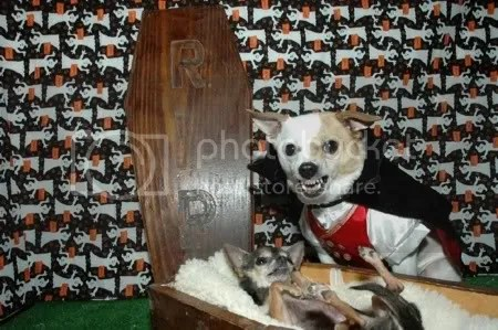Dracula Dog Pictures, Images and Photos