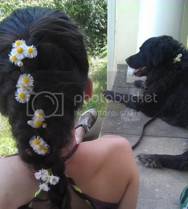 Braided hair daisies and Newfoundland with daisy in collar.