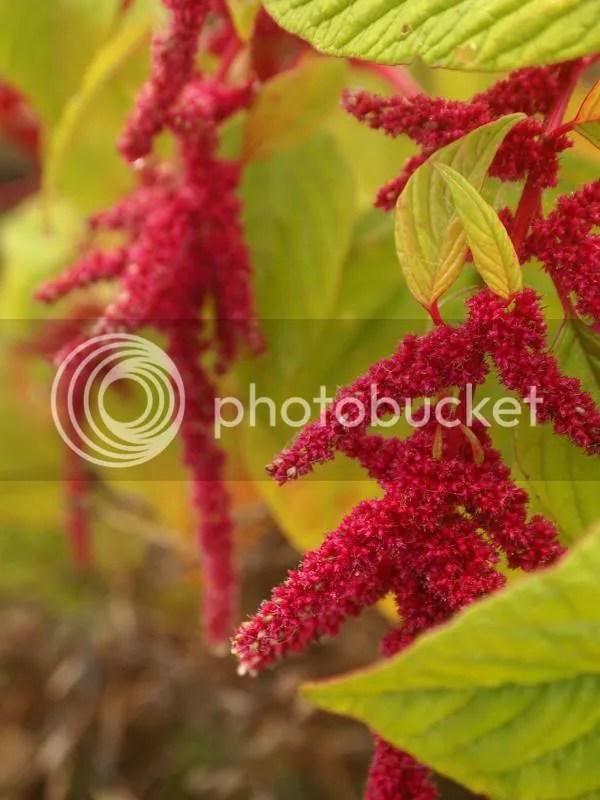 photo flower_fall2013_zps33152cad.jpg