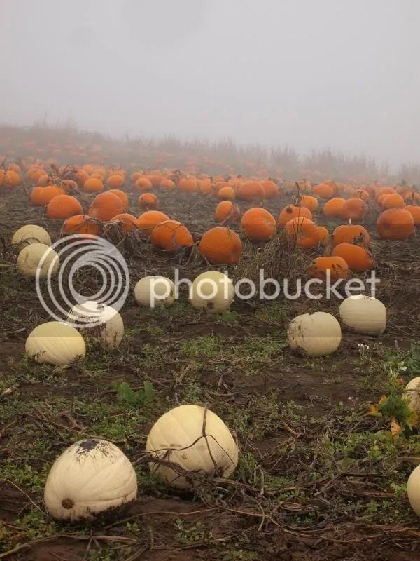 photo pumpkinpatch2013_zps8fd005d7.jpg