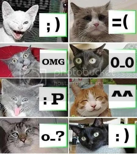 For all you cat-lovers.