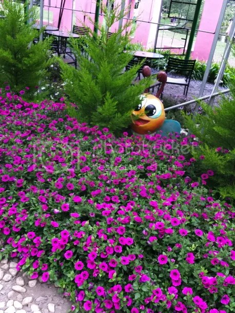 photo 20140510_173611_zpsb64238f6.jpg
