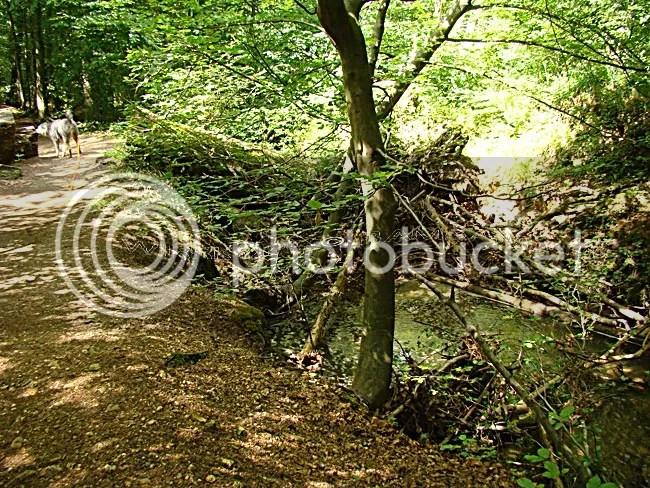 photo 2011-06-12-032_zps58d5e999.jpg