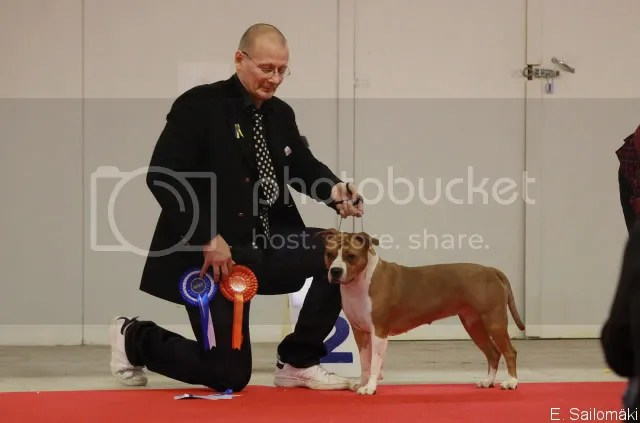 Turku Top Dog Show CACIB 2011-01-23