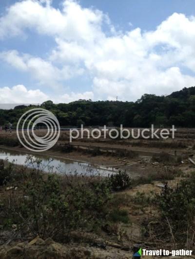 Yim Tin Tsai salt field