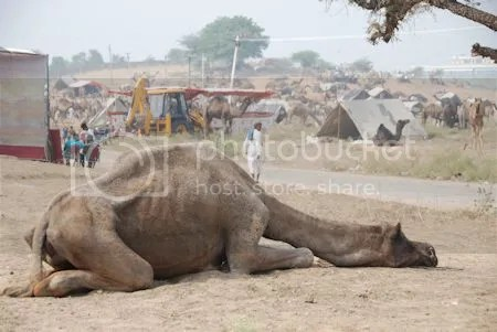 photo DSC_1634PushkarCamelFair.jpg