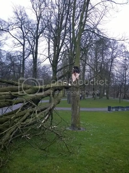 photo WP_20170223_002StormValkenbergBreda.jpg