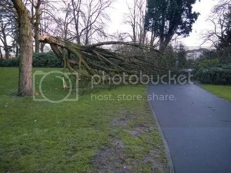 photo WP_20170224_002StormschadeBredaVervolg.jpg
